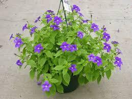 Цветы для тенистого сада: фото и названия