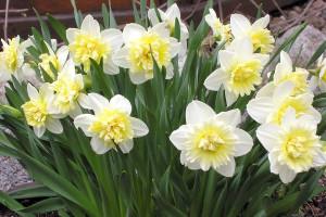 Комнатные растения цветущие зимой: фото и название