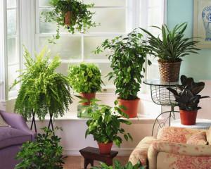 Чайные пактики для комнатных растений