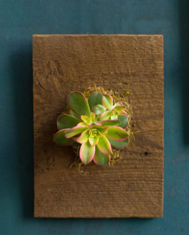 kartina-iz-zhivyx-cvetov-12